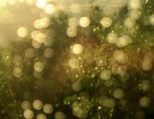 A Gleaming, May Rain (2008)